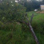 Исправление склонности яблони